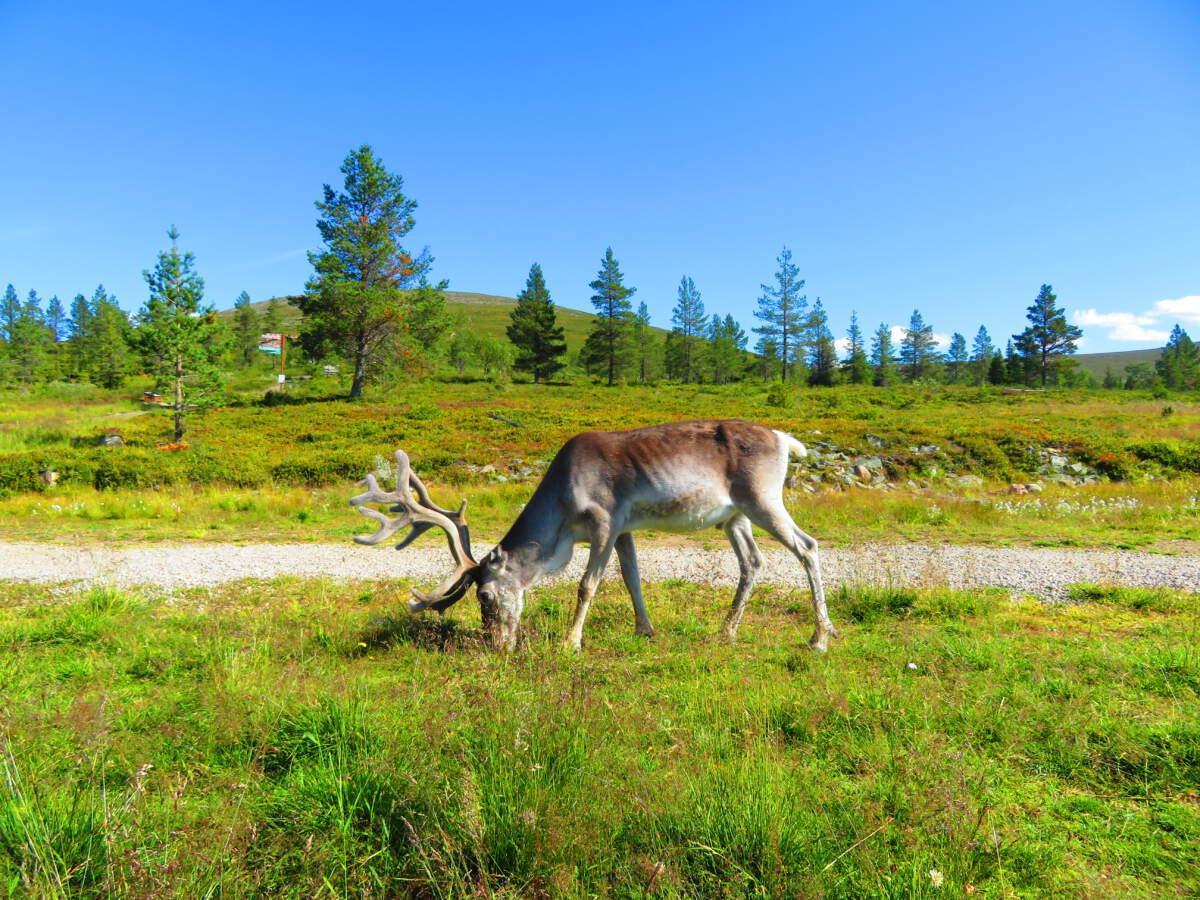 Finland rondreis Noordkaap